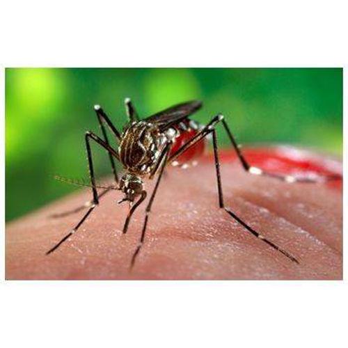 Komarji, zika in nevarne bolezni!