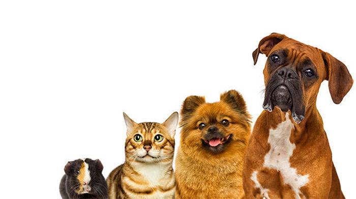 Slika za kategorijo Živali