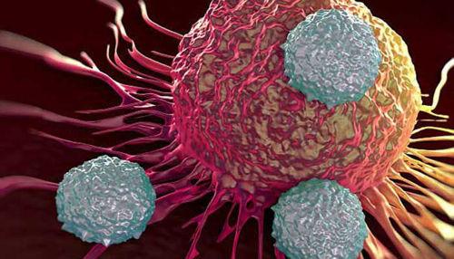 Znanstveniki Inštituta Jožef Stefan na poti razumevanja nastanka raka!