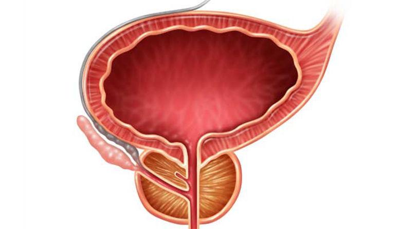 Picture of Prostata - strokovni nasveti za težave »tam spodaj«