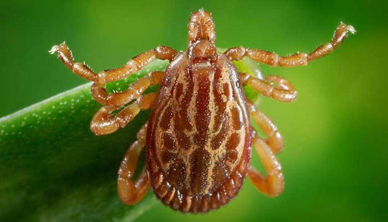 Picture of Zaščita malih živali pred zunanjimi zajedalci!