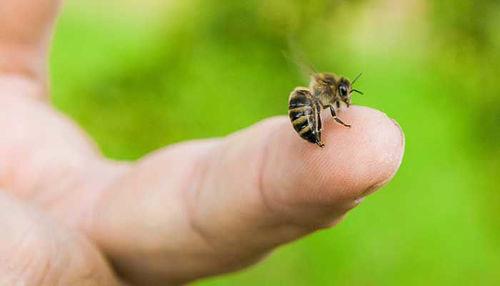 Piki žuželk in uporaba repelentov!