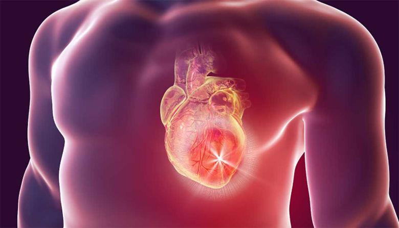 Picture of Srce in ožilje ter krepitev!