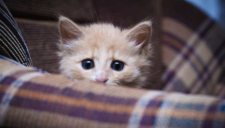 Picture of Prazniki - za nas najlepši čas, za domače živali velik stres!