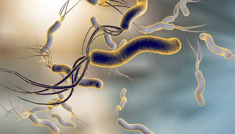 Picture of Okuženost svetovnega prebivalstva z bakterijo Helicobacter pylori