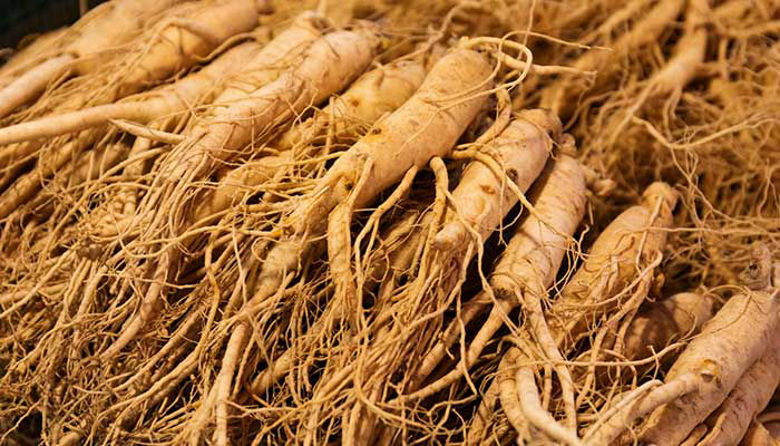 Picture of GINSENG