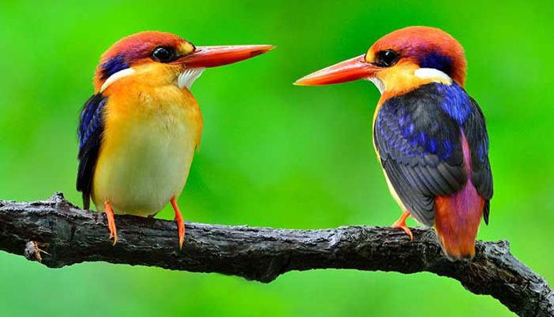 Picture of Ko se ptički ženijo - 12. marec